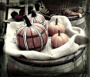 pumpkins 3 - Jana ART