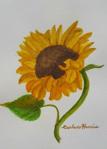 Dance Of The Sunflower