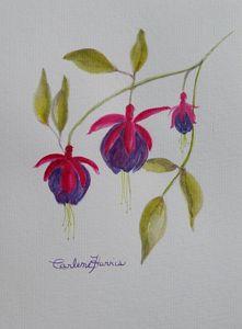 Fuchsia Blooms