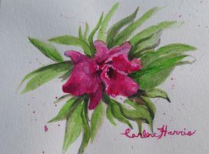 Fuchsia Colored Orchid - Fun With Art