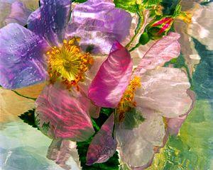 Wild Flower Ice Series 6