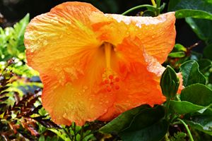 San Diego Flower