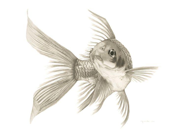 'Fishy' - Mercedes Victoria