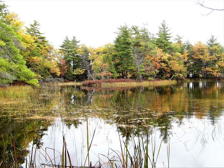 Sauble River in the fall - Michigan's Natural Beauty