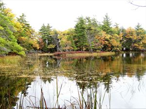Sauble River in the fall