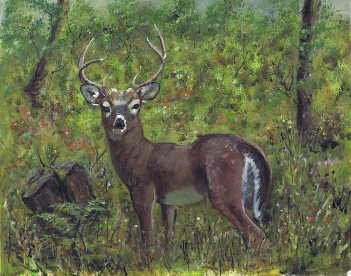 The Red deer in the new forest - Phil Willetts