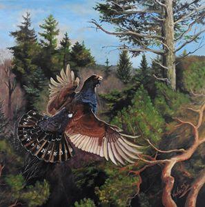 Wood Grouse - Painter Marek Vodvářka
