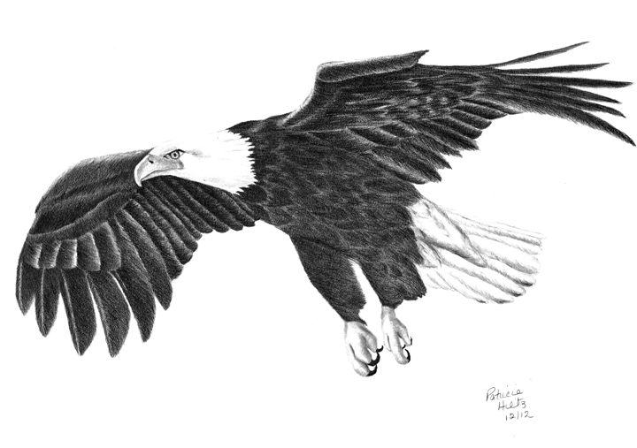 Bald Eagle - PatriciaHiltz