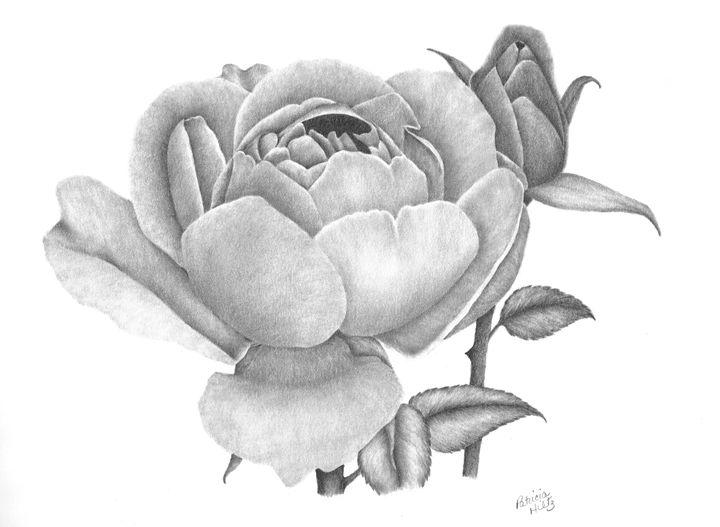 A Rose Bloom - PatriciaHiltz