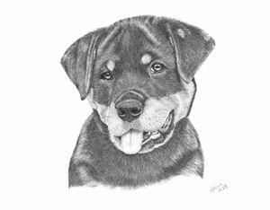 Rottweiler Puppy-Chloe