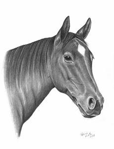 A Horse Beauty