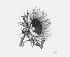 A Sunflowers Beauty