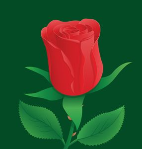 Illustration of Red Rose