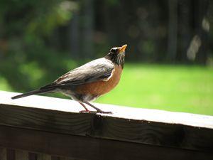 Bird in the summer.