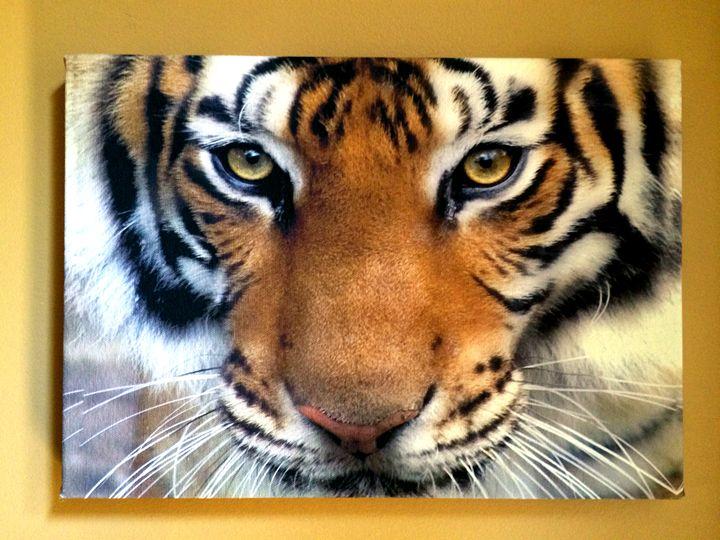 Tiger Eyes - Chameleon Canvas Art