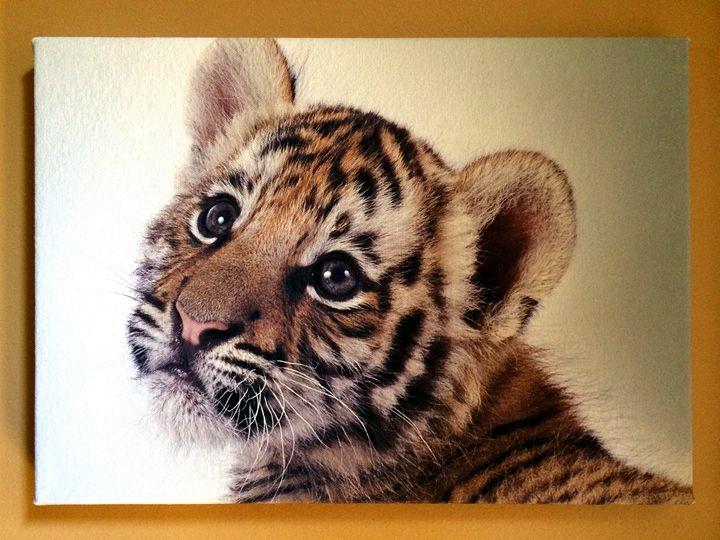 Tiger cub - Chameleon Canvas Art
