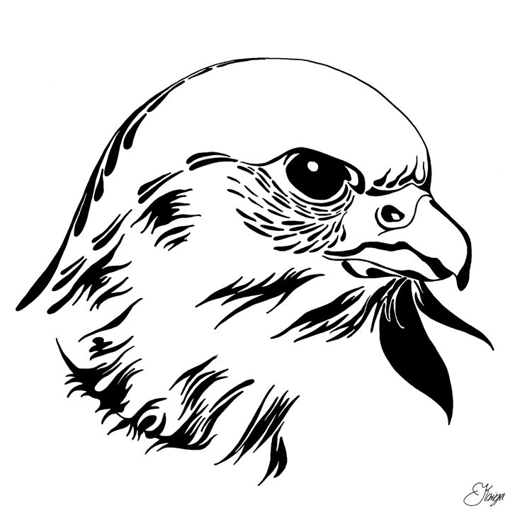 Falcon Head - KRIYA OCEANS