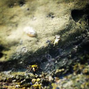 Crabby friends