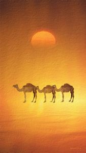 Desert, Camels and Sunset