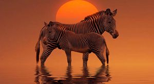 Two Zebras in the Sunset