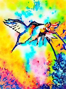 Humming Bird Hovering