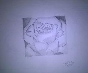 Pencil Sketch - Rose