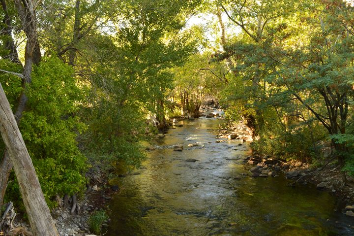 River Stream - Photography by Shellee