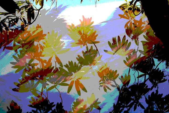 leaves on the water - Steven's gallery