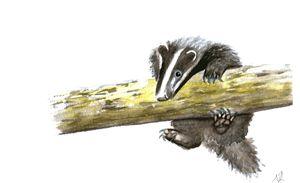 Badger Cub Watercolour Painting