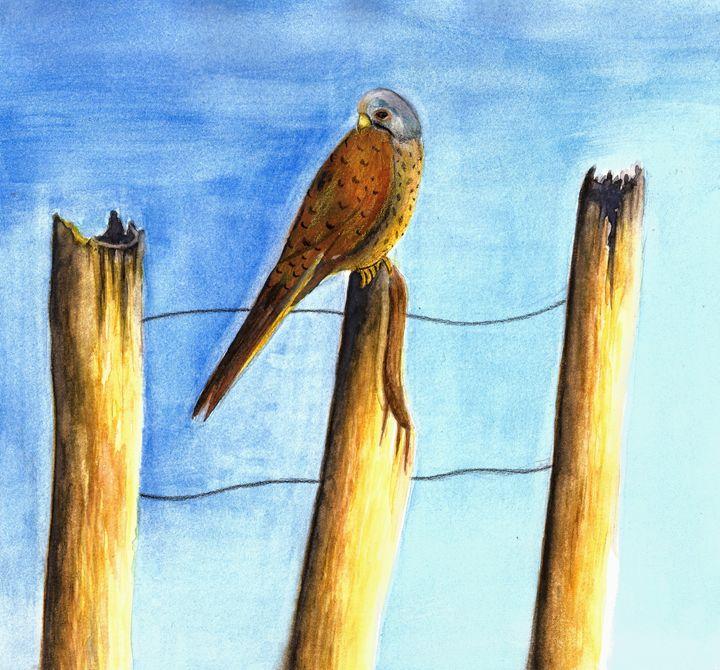 Perched Kestrel painting - Natasha Lovell Art