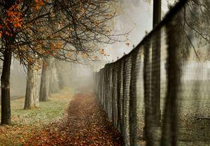 Foggy morning walk