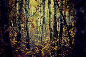 dark forest room