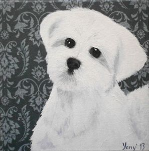 Maltese white furry puppy