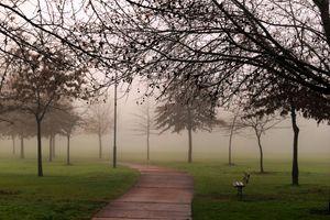 Pathways in the mist