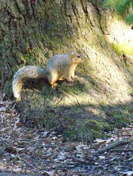 Squirrel - TiffanyWright