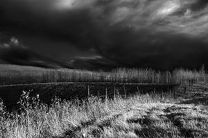 A Field in Black and White
