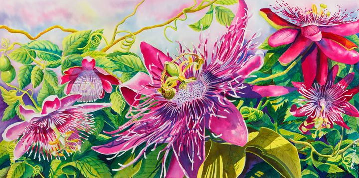 Passionflower Party - Janis Ilene Images