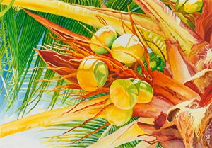 Under the Coconut Palm - Janis Ilene Images
