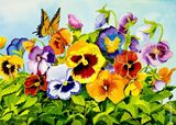 pansies and butterfly in summer ligh