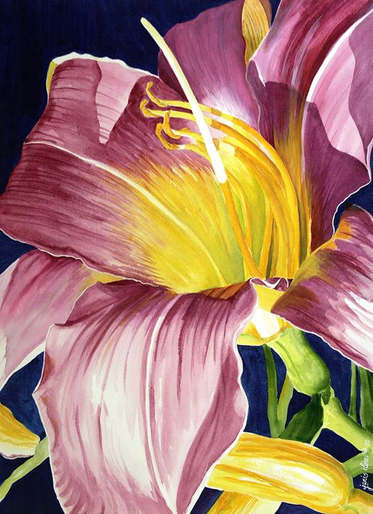 Day Lily in Sunlight - Janis Ilene Images