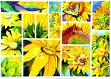 Scenes of sunflowers in watercolor