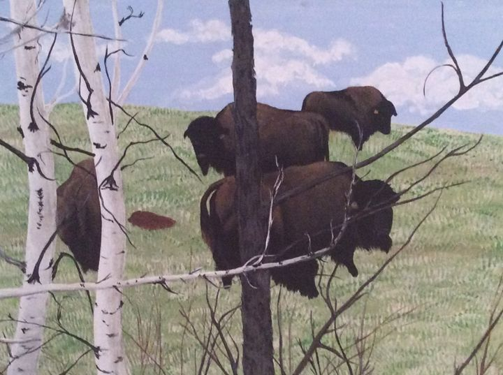 Bison - Terri Price