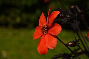 Blossomed Flower