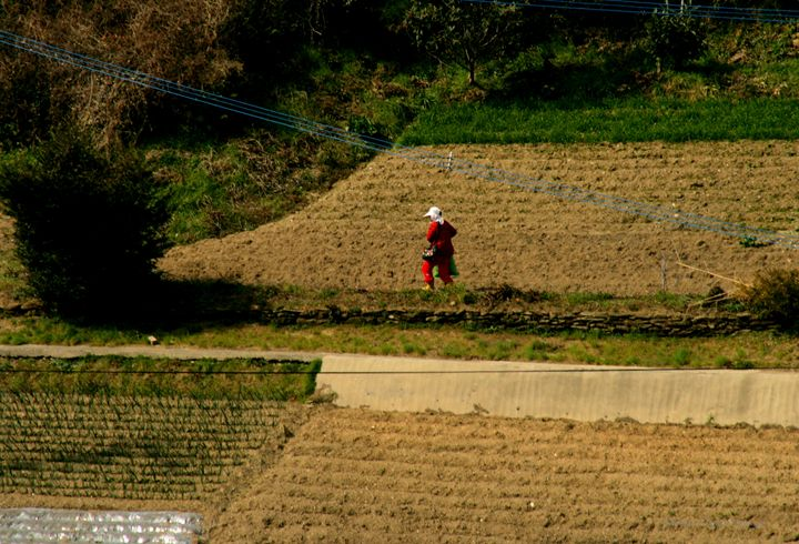 Farming - Working the fields - Shirleypix Art & Photography