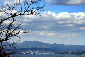 Birds overlooking the Pacific Ocean