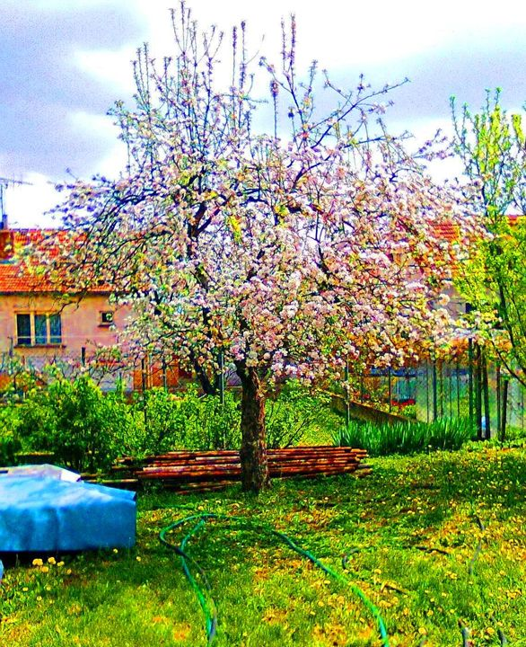 104 Magic of the Apple Tree - Mardy Bautiful Pictures