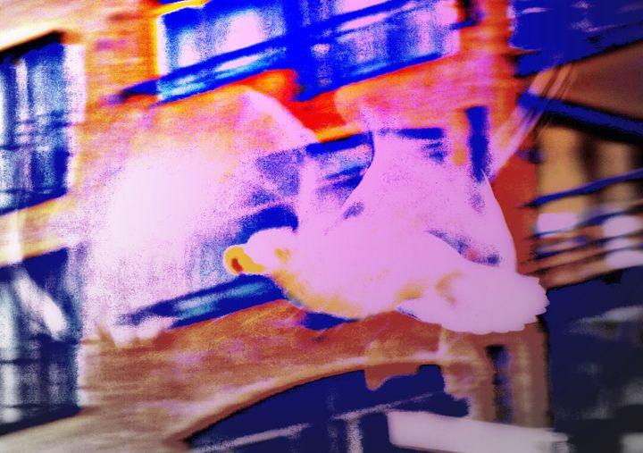 Seagull in the city - Hilde Widerberg ART