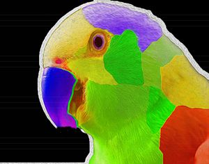 Nixo Parrot 01