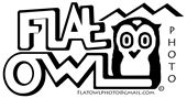 Flat Owl Photography