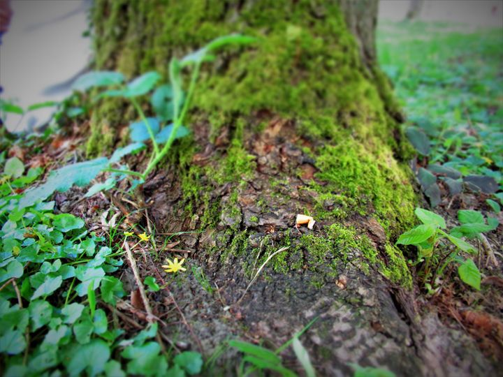 Tree bark - Iulia B